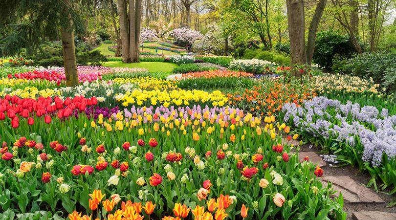 Image result for spring in holland