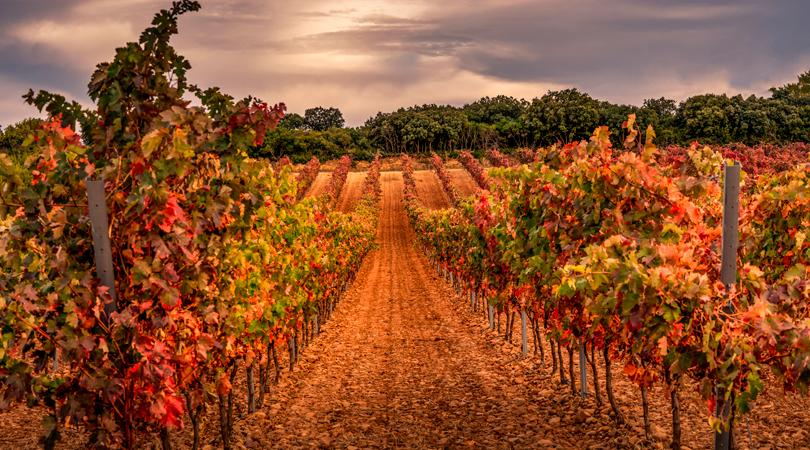 Bedandbreakfast.eu; Wine trips in Europe